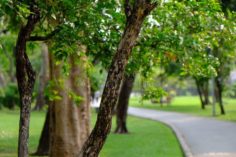 绿色公园 库存图片