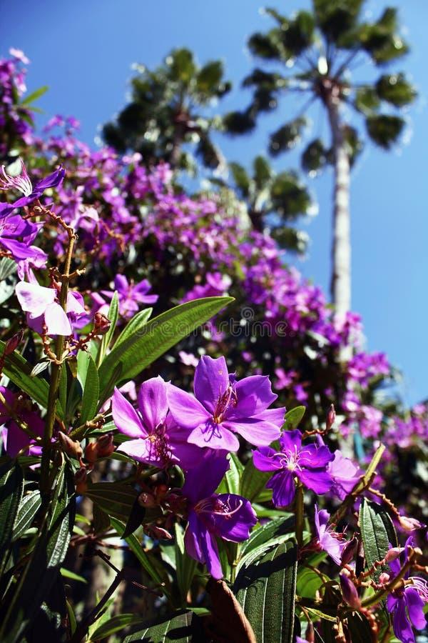 紫色公主Flowers在奥兰多 免版税库存照片