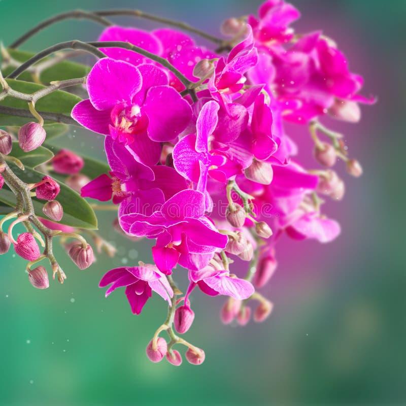 Download 紫色兰花分行 库存图片. 图片 包括有 特写镜头, 粉红色, 言情, 花束, 设计, 兰花, 工厂, 绽放 - 62537877
