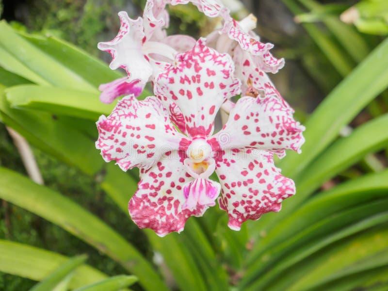 紫色兰花在一个狂放的热带森林里 图库摄影