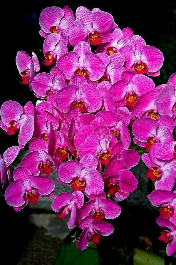 紫色兰花浪花 免版税库存图片