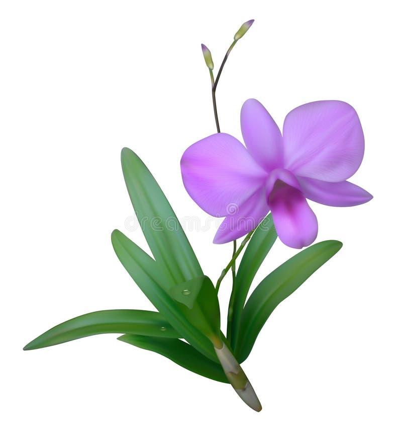 紫色兰花 皇族释放例证