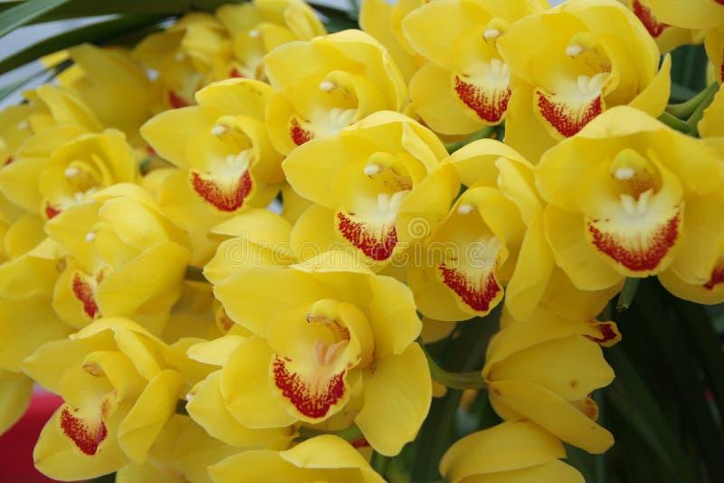 黄色兰花 库存图片