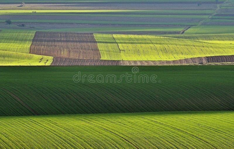 绿色几何 库存照片