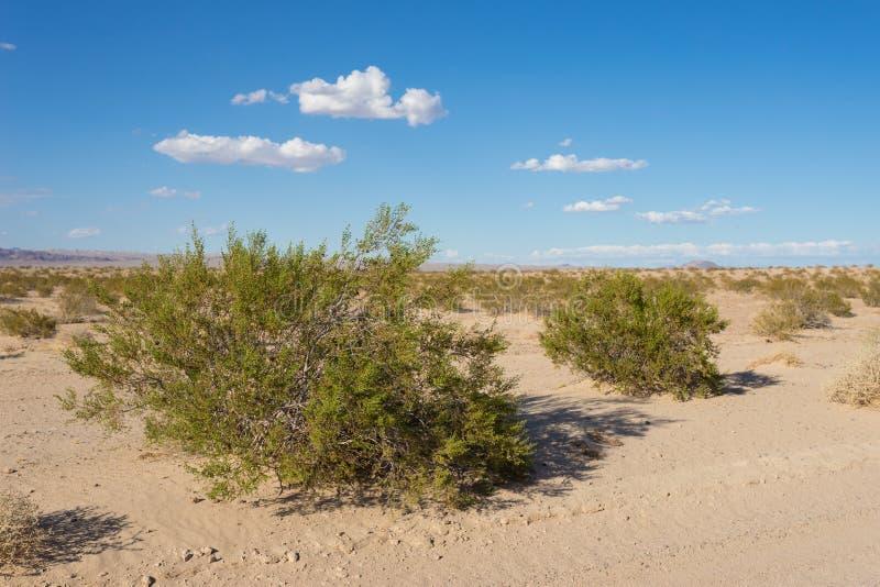 绿色刷子在贫瘠沙漠 库存照片