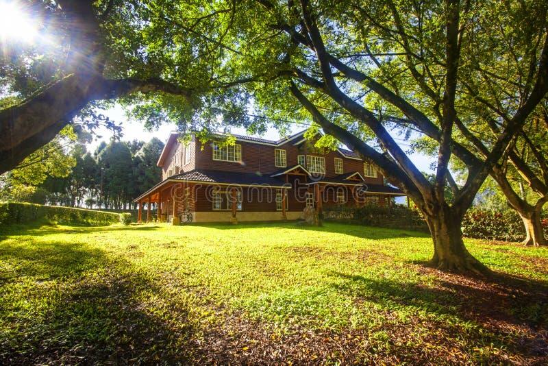 绿色树在公园和阳光 免版税图库摄影
