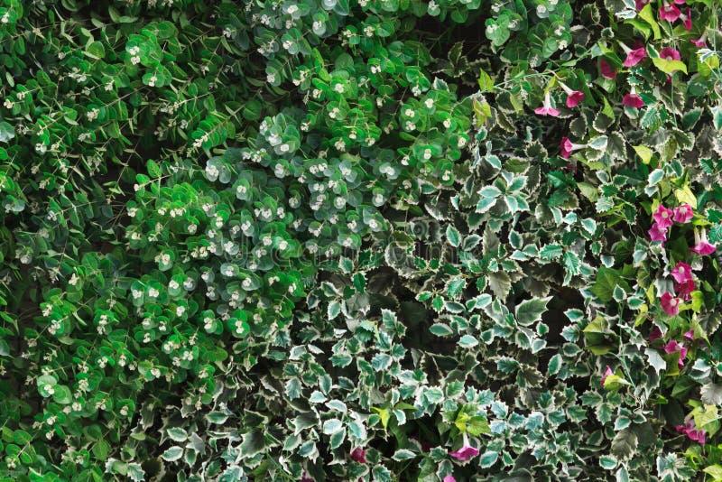 绿色叶子和五颜六色的花背景 免版税库存照片