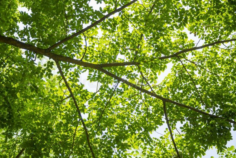 绿色叶子和分支 库存图片