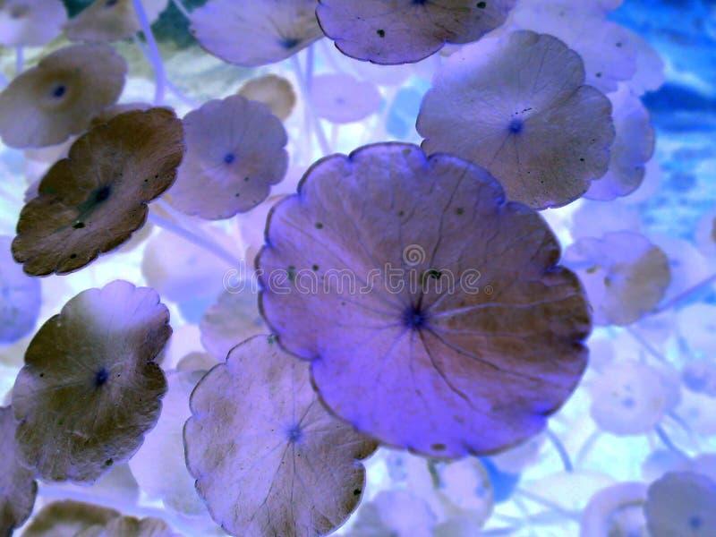 紫色叶子和美丽的石头 库存图片