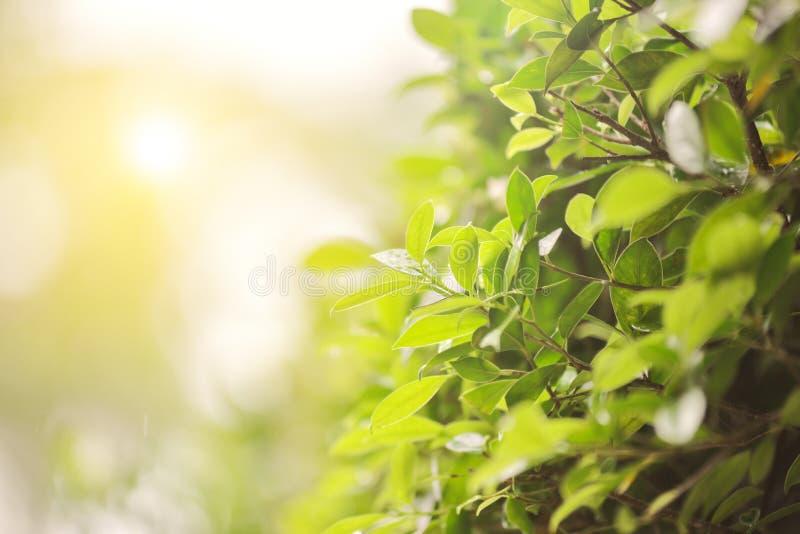 绿色叶子在雨中 免版税库存照片