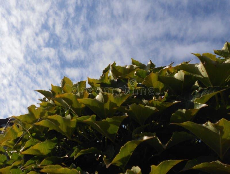 绿色叶子天空 免版税库存图片