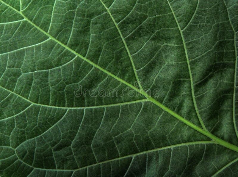 绿色叶子样式完善的背景 免版税库存图片