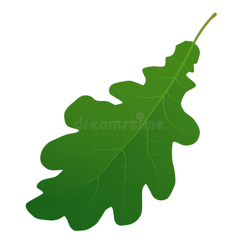 绿色叶子橡木 皇族释放例证