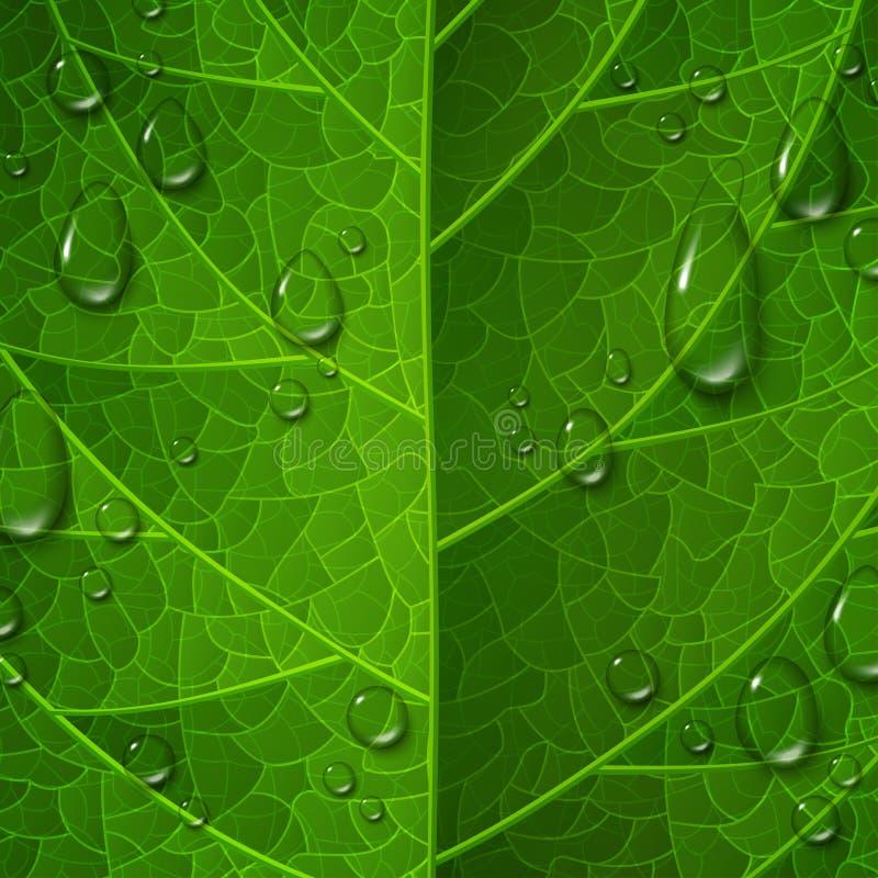 绿色叶子表面宏观看法用水下降 库存例证