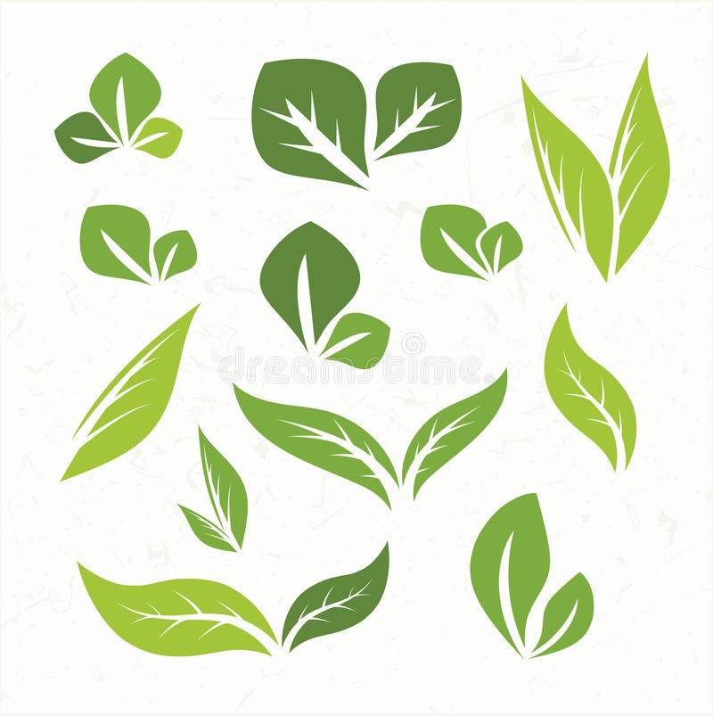 绿色叶子设计元素 库存例证