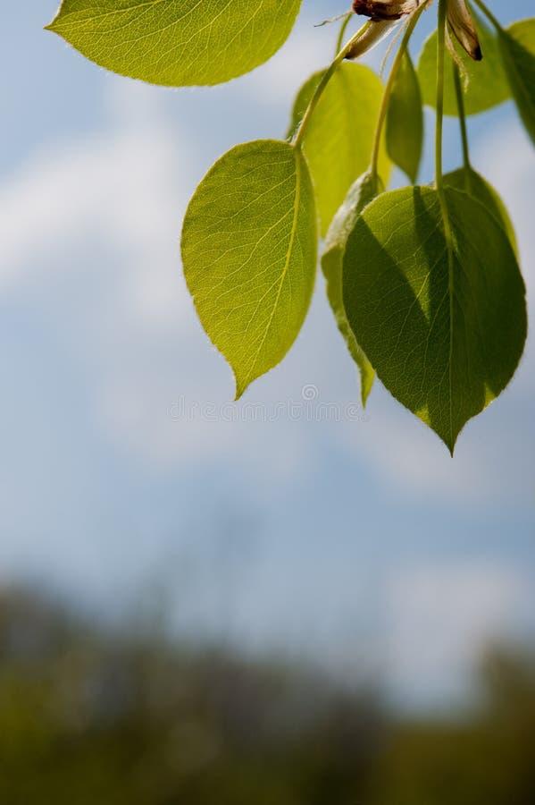 Download 绿色叶子 库存照片. 图片 包括有 夏天, 庭院, 晴朗, defocus, 背包, beautifuler - 30337706
