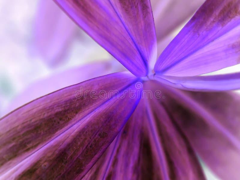 紫色叶子 库存照片