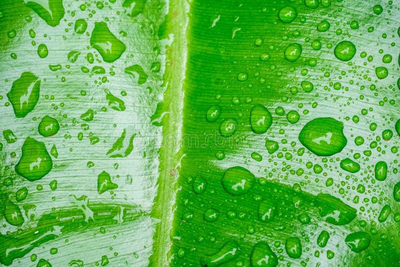 Download 绿色叶子 库存图片. 图片 包括有 关闭, 叶子, 绿色, 背包, 生气勃勃, 宏指令, 自然, 下落, 小滴 - 59107877