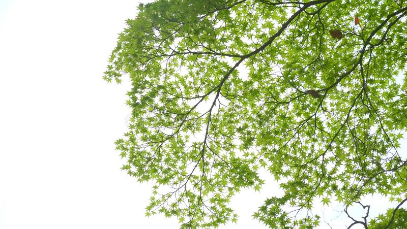 绿色叶子 免版税库存照片