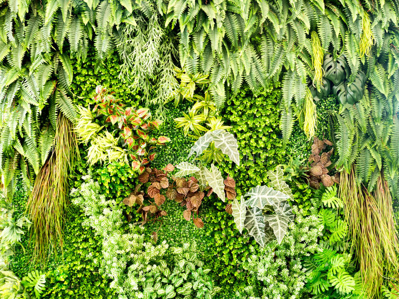 绿色各种各样的爬行物蕨和醉汉植物在墙壁上 自然和环境概念 免版税库存照片