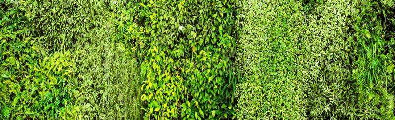 绿色各种各样的爬行物蕨和醉汉植物在墙壁上 免版税库存图片