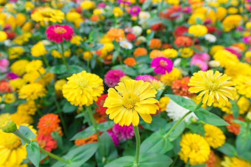 黄色和五颜六色的花 库存照片