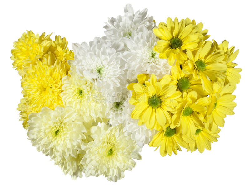 Download 黄色和白色菊花花 库存图片. 图片 包括有 夏天, 查出, 前景, ,并且, 细微差异, 黄色, 招标, 花束 - 62528285