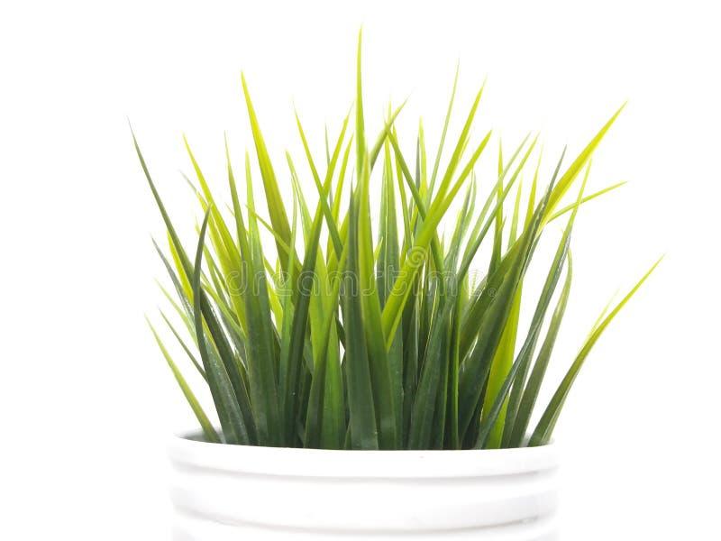 绿色和白色 免版税库存图片