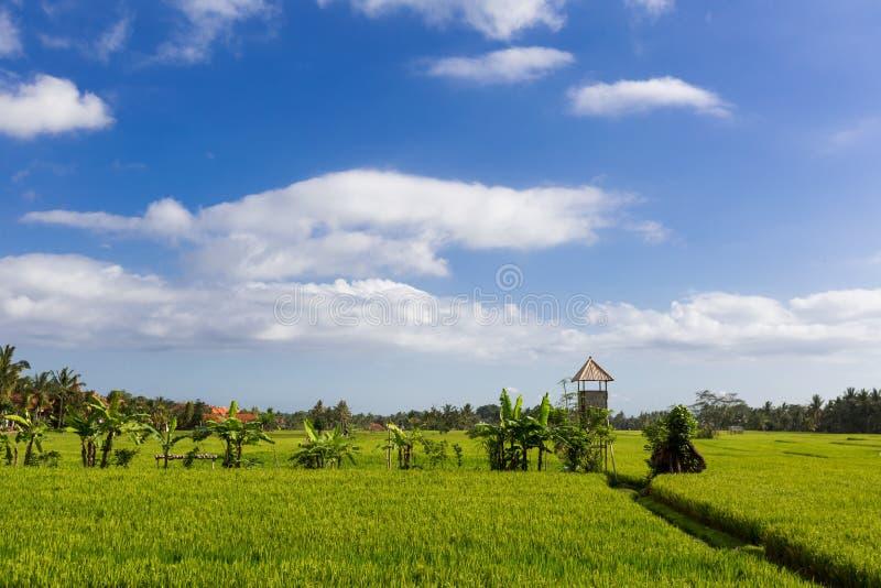 绿色和金领域,蓝天 免版税库存照片