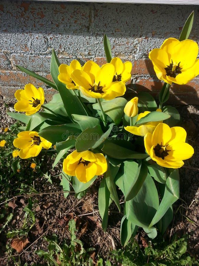 黄色和黑可爱 免版税库存图片