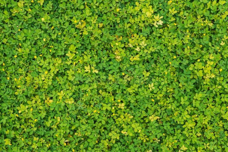 绿色和黄色叶子 免版税库存照片
