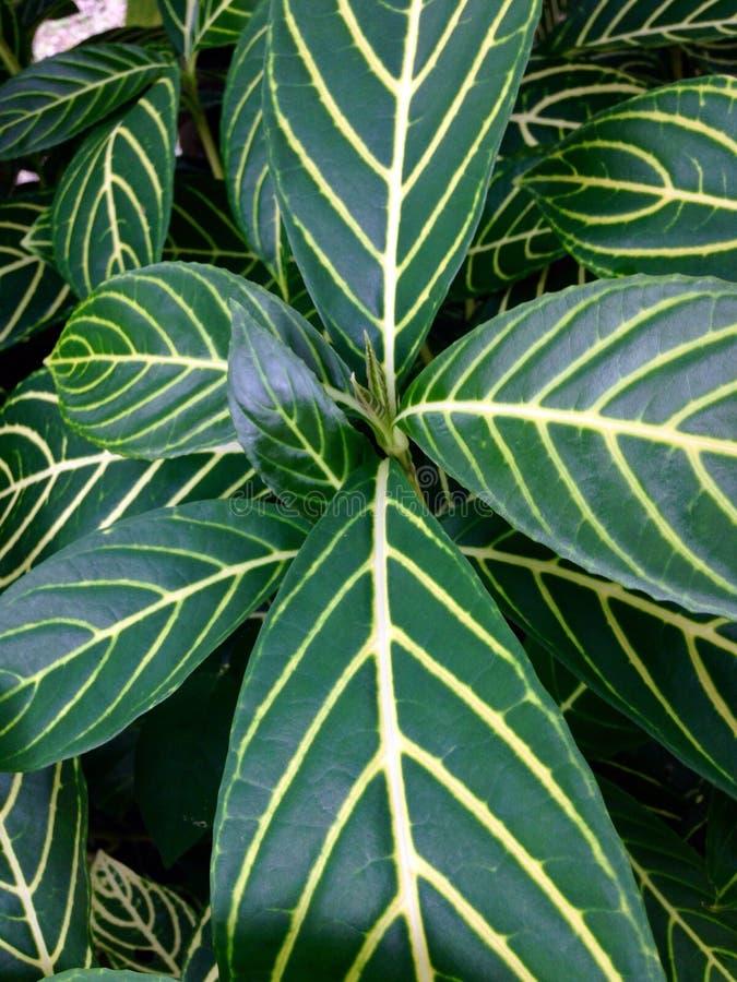 黄色和绿色纹理叶子 免版税库存图片