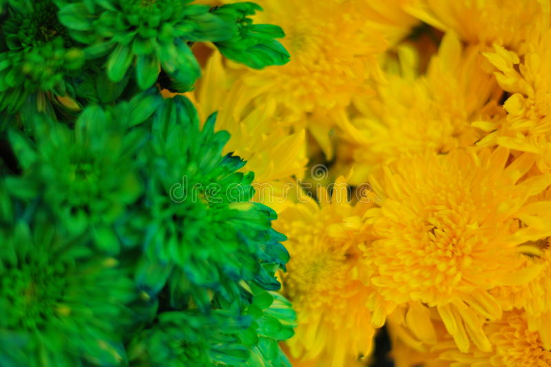 绿色和黄色花#2 库存图片