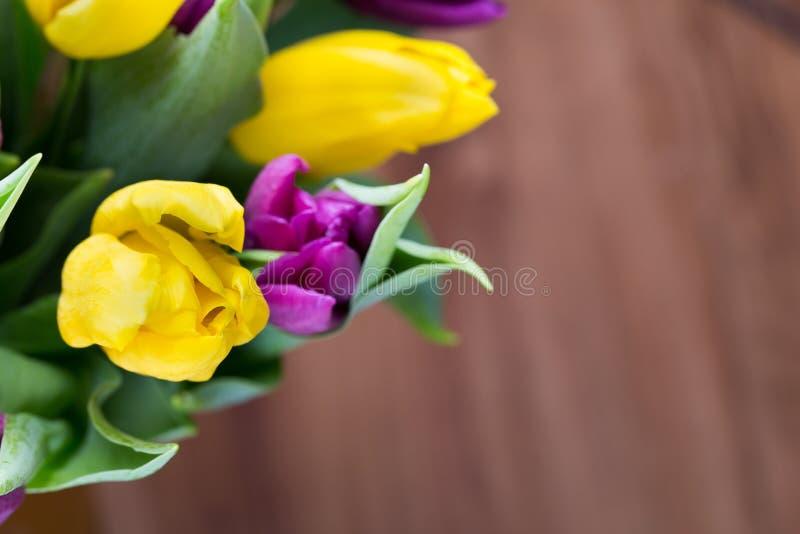紫色和黄色郁金香花束 在灰色backgrou的更多郁金香 图库摄影