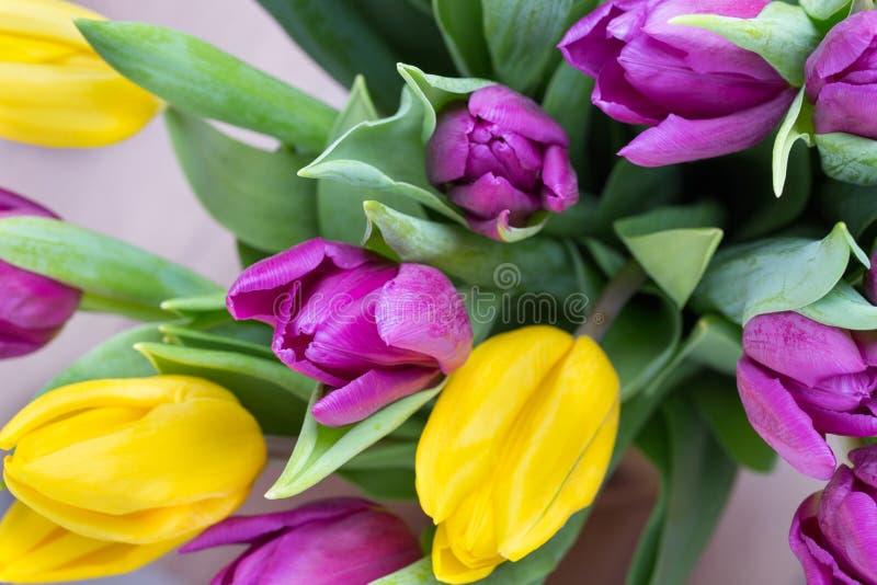 紫色和黄色郁金香花束 在灰色backgrou的更多郁金香 免版税库存图片