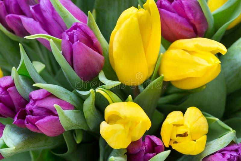 紫色和黄色郁金香花束 在灰色backgrou的更多郁金香 免版税库存照片