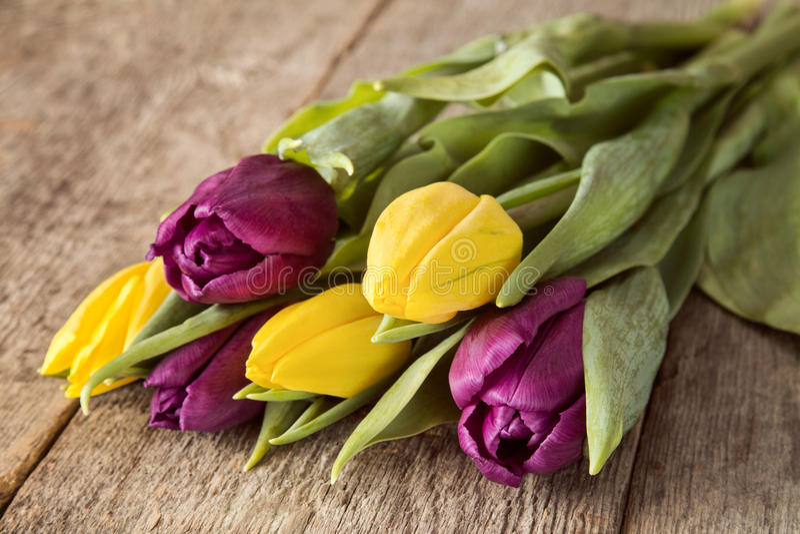 黄色和紫色郁金香花束 库存照片