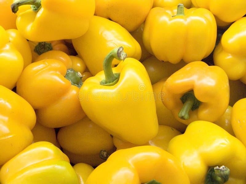 黄色喇叭花胡椒或甜椒 免版税图库摄影