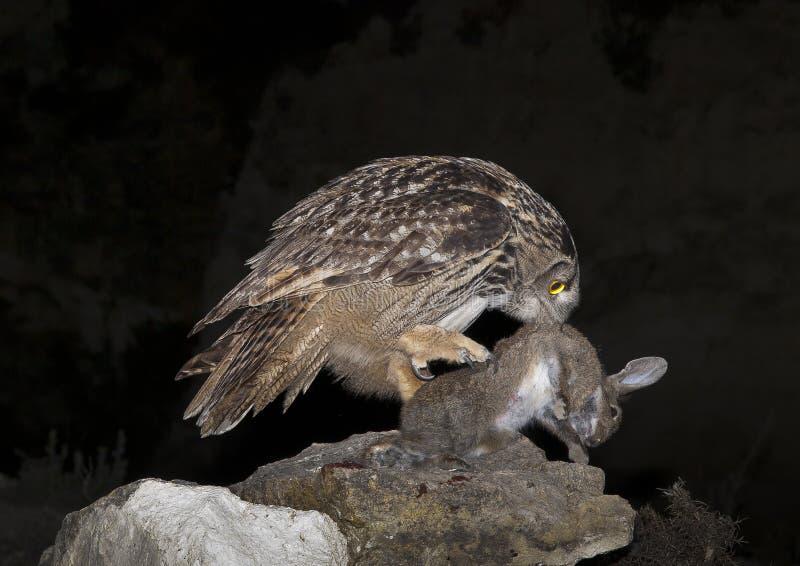 黑色图画老鹰例证墨水猫头鹰向量 免版税库存图片