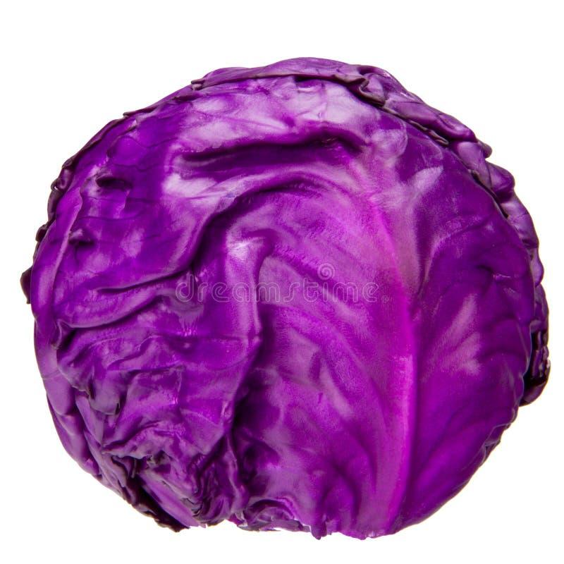 紫色圆白菜 免版税库存照片