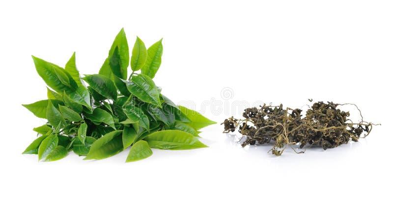 绿色在白色背景隔绝的茶叶和干茶 免版税库存图片