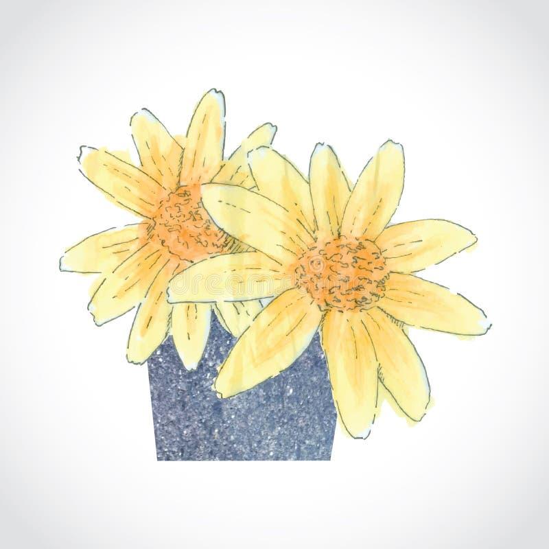 黄色在石花瓶的水彩墨西哥花 库存图片