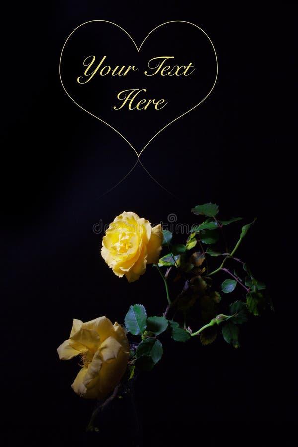 黄色在黑背景的玫瑰特写镜头 库存照片