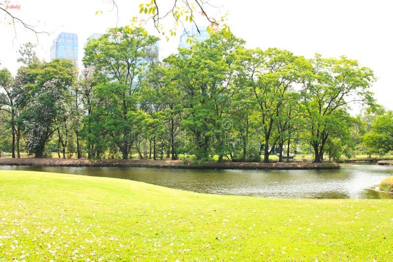 绿色城市公园 免版税图库摄影