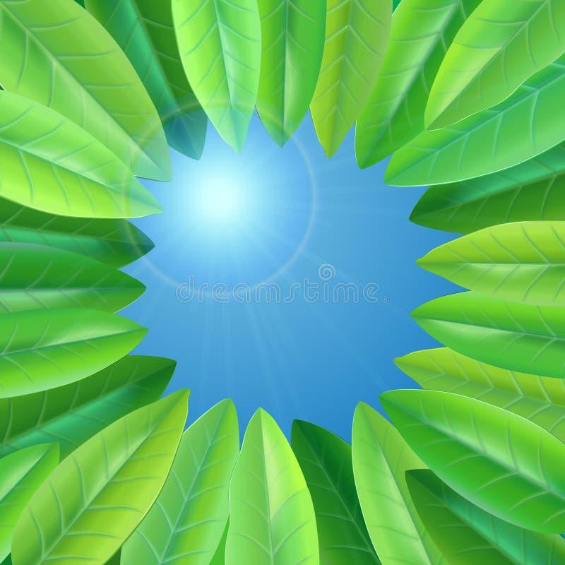 绿色夏天叶子 向量例证