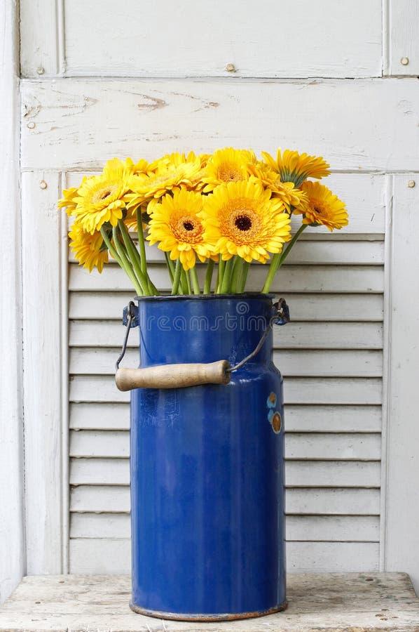 黄色大丁草雏菊花束在蓝色桶的 库存图片