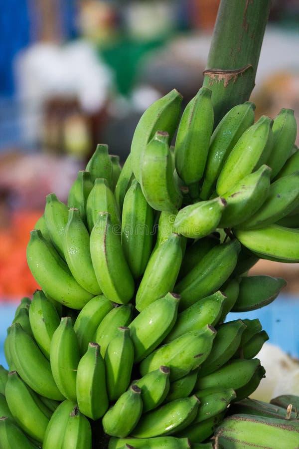 绿色大蕉 免版税库存照片