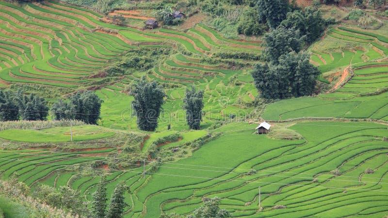 绿色大阳台米领域鸟瞰图在Sapa 免版税库存照片