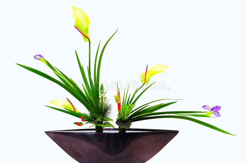 花在花瓶白色背景中 库存图片