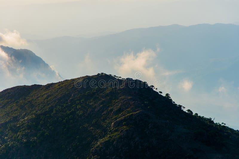绿色安达卢西亚的小山 免版税库存图片